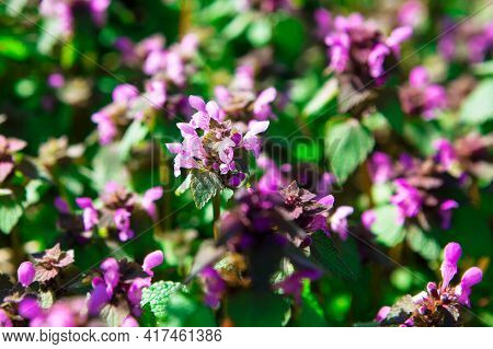 Spring Uncultivated Wild Flowers In Blooming Colors