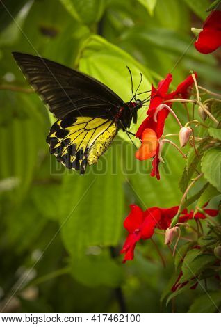 Beautiful Yellow Black Butterfly On The Flower Help Pollinate The Plants