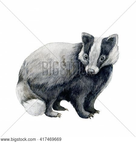 Badger Animal Hand Drawn Image. Watercolor Illustration. Wild Forest Animal. Woodland Black And Whit