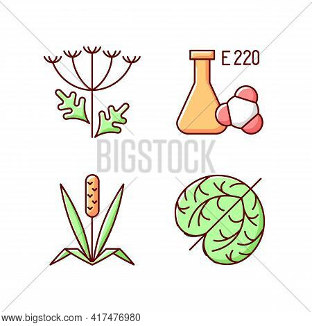 Allergens Rgb Color Icons Set. Queen Annes Lace. Chemical Sulphites. Dry Tumbleweed. Timothy Grass.