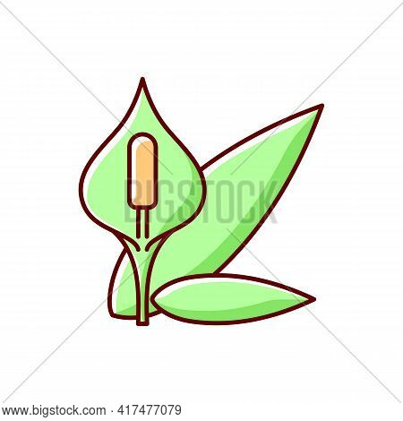 Spathiphyllum Rgb Color Icon. Peace Lily. Seasonal Flower, Pollen Allergy. Houseplant Bloom. Common