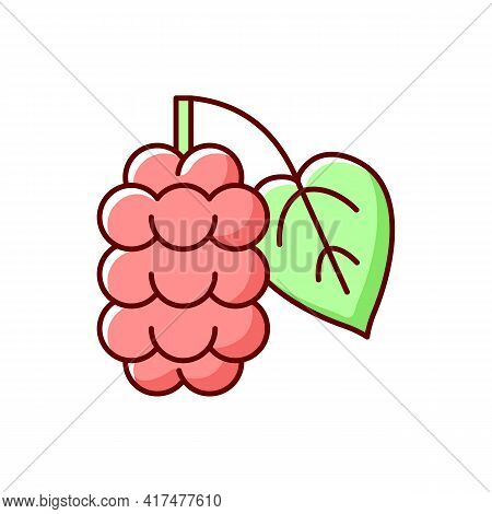 Mulberry Rgb Color Icon. Morus Fruit, Blackberry On Branch. Food Ingredient. Nutrient And Vitamin De