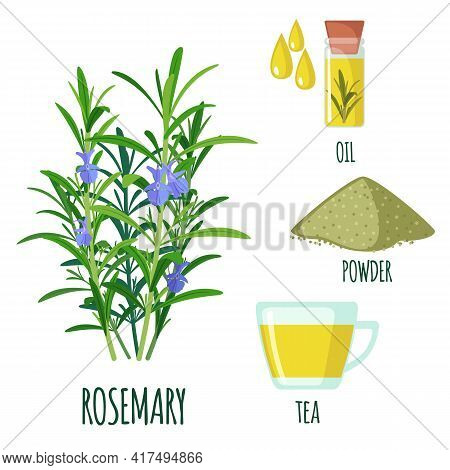 Vector Rosemary Sprigs Set In Flat Style Isolated On White Background.