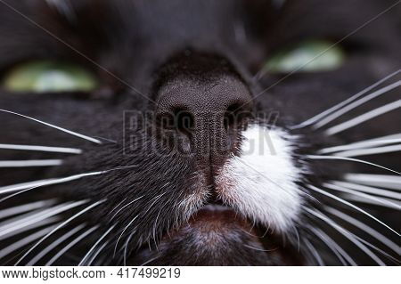 Black Cat's Nose And White Spot With Whiskers And Green Eyes.