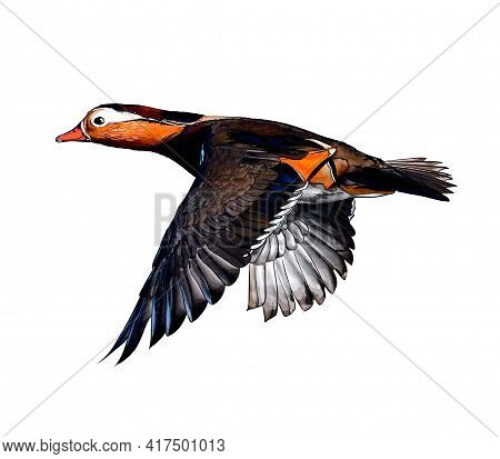 Mandarin Duck From A Splash Of Watercolor, Colored Drawing, Realistic. Vector Illustration Of Paints