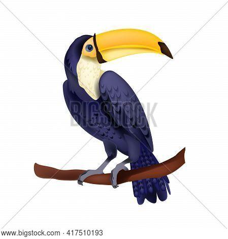 Toucan Vector Illustration, Exotic Tropical Sitting Bird Isolated On White, Yellow Beak, Purple Feat