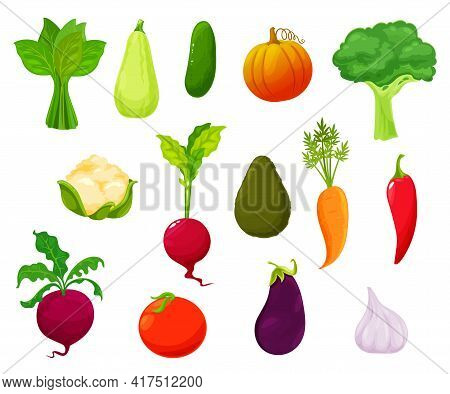 Farm Vegetables Harvest, Market Veggies Vector Set. Sorrel, Zucchini And Cucumber, Pumpkin, Broccoli