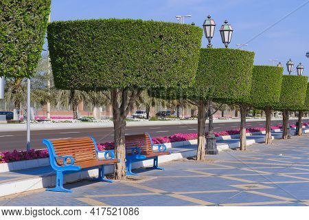 Recreation Area With Classic Wooden Benches Along Road Walkway With Shaped Trimmed Ornamental Topiar