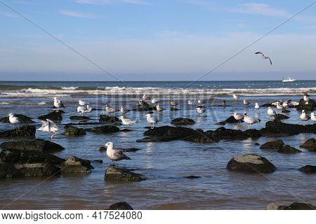 Seagulls Sitting On Beach Rocks. Seagulls Flying Over The Sea.