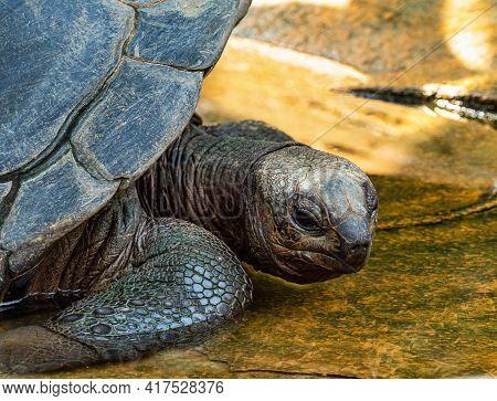 Aldabra Giant Tortoise, Curieuse Marine National Park, Curieuse Island, Seychelles