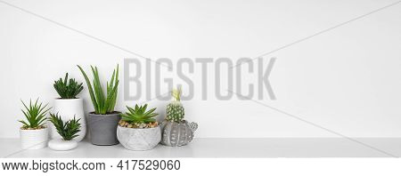 Group Of Indoor Succulent And Cactus Plants On A Shelf. White Shelf Against A White Wall.