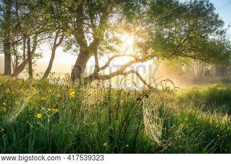Summer Scenery. Misty Sunrise. Sunbeams Through Tree Branches. Bright Sunbeams. Meadow In Yellow Flo