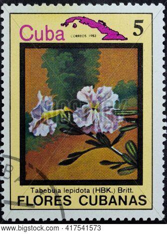 Republic Of Cuba - Circa 1983: Postage Stamp Of 'tabebuia Lepidota' Printed In Republic Of Cuba. Ser