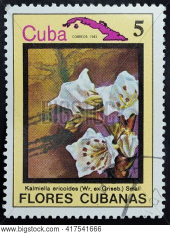 Republic Of Cuba - Circa 1983: Postage Stamp Of 'kalmiella Ericoides' Printed In Republic Of Cuba. S