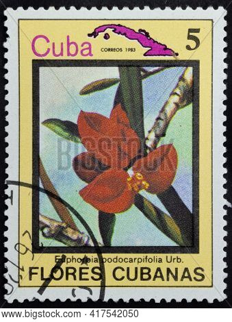 Republic Of Cuba - Circa 1983: Postage Stamp Of 'euphorbia Podocarpifolia' Printed In Republic Of Cu