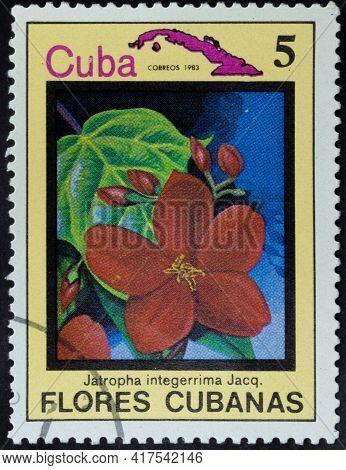 Republic Of Cuba - Circa 1983: Postage Stamp Of 'jatropha Integerrima' Printed In Republic Of Cuba.