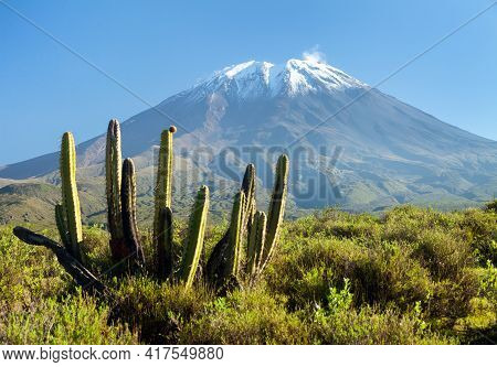 El Misti Volcano And Cactus, One Of The Best Of Volcanoes Near Arequipa City In Peru