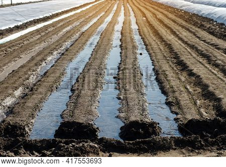 Irrigation Rows Of Carrot Plantations. Natural Watering After Sowing Seeds. Moisturize Soil And Stim