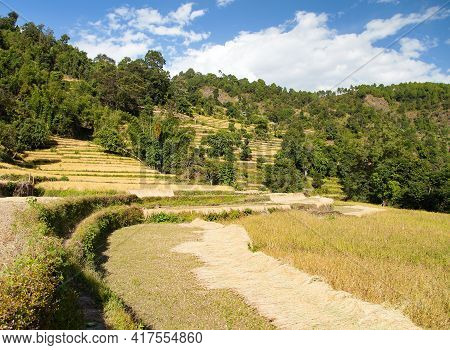 Golden Terraced Rice Or Paddy Fields In Nepal Himalayas Mountains