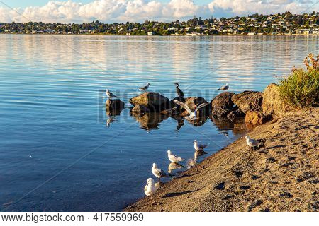 Taupo is the largest lake in New Zealand and Australia. Magnificent sunset. The most popular holiday destinations for tourists. Quiet evening on the lake.