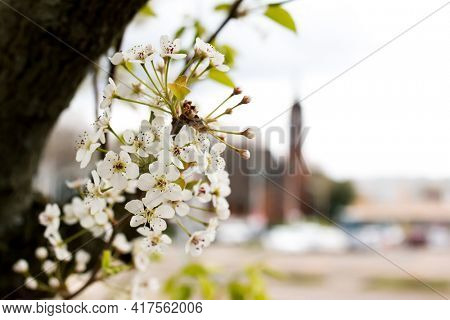 Spring tre flowers in bloom with out of focus background