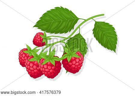 Raspberry Sweet Fruit Illustration For Web Isolated On White Background