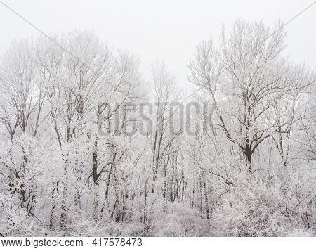 landscape with trees and rime in cold weather in winter