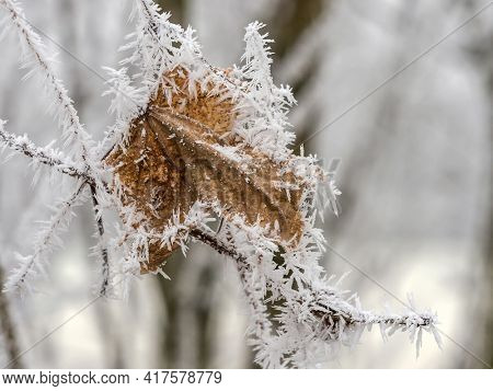 hoarfrost in winter. cold leave