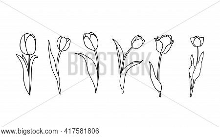 Hand Drawn Set Of Tulips. Flower Isolated On White Background. Single Tulips In Outline Style.