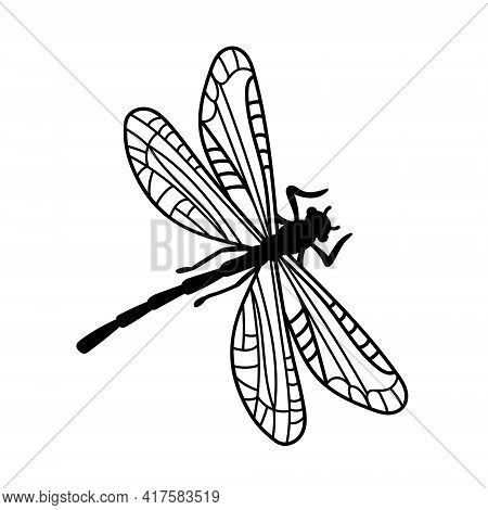 Design Dragonfly. Abstract Black Closeup On White Backdrop. Isolated Vector Illustration.