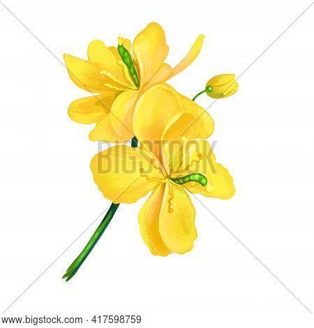 Greater Celandine Or Chelidonium Majus Yellow Flowers Isolated Digital Art Illustration. Perennial H