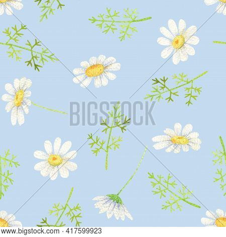 White Daisy Seamless Pattern. Watercolor Wildflowers On Sky-blue Background