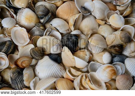 Summer Background Pattern From Seashells. Shell Close-up. Ocean Coast. Seashells Background. Top Vie
