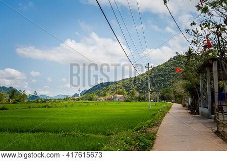 Rice Field In Phong Nha Vietnam