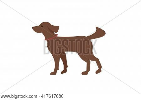 The Hunting Dog Is An Irish Red Setter With A Sports Equipment On The Neck-puller. Dog Icon Or Logo