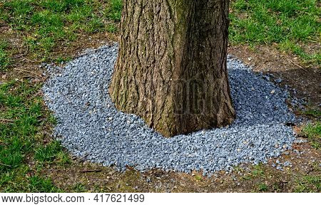 Maintaining Greenery, It Is Necessary To Protect Trees And Flower Beds Against Entry. Trees Are Dama