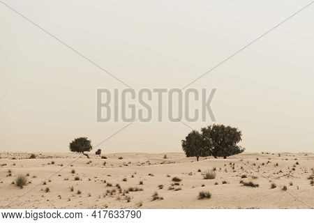 Trees Growing In Wild Desert. Nature Landscape. Sandy Dunes And Desert Vegetation
