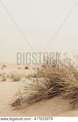 Vertical Photo Of Desert Vegetation. Plants Growing In A Wild Sandy Desert