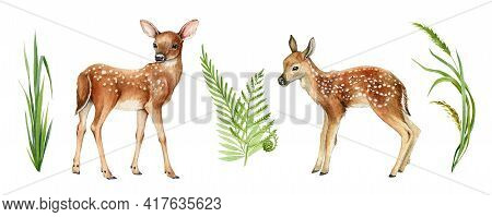Two Forest Small Deers. Beautiful Fawn Image. Forest And Park Wildlife Animal Set On White Backgroun