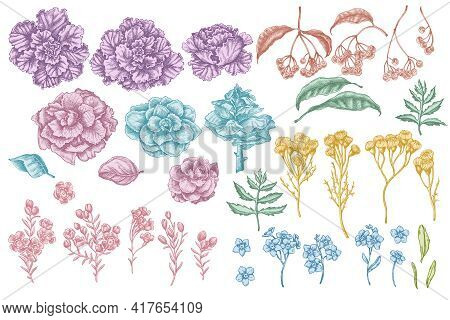 Vector Set Of Hand Drawn Pastel Wax Flower, Forget Me Not Flower, Tansy, Ardisia, Brassica, Decorati
