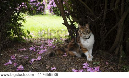 Domestic Cat For A Walk In The Garden. The Animal Hid In The Thickets Against The Background Of A Me