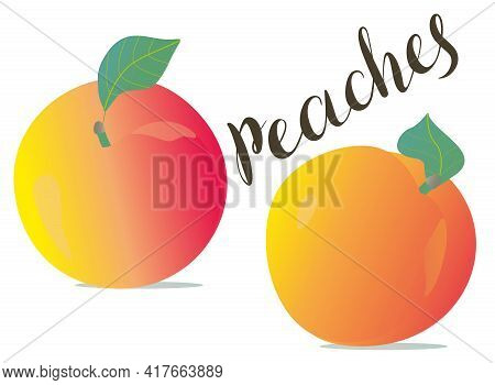 Vector Peach Illustration. Vector Peaches Isolated On White Background