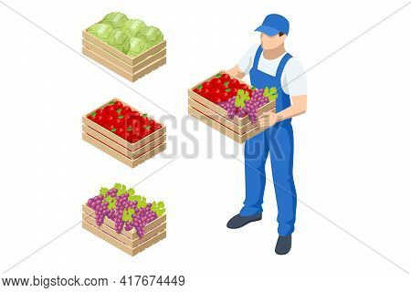 Isometric Farmer Holding A Box With Apples And Grapes. Farmer With Freshly Harvested Apples In Woode