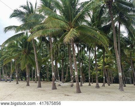 Rope Hammock On Seaside In Palm Tree Forest. Idyllic Tranqil Place Perfect For Relaxing Vacation On