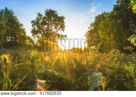 Early Sunrise. Summer Scenic Landscape Of Forest. Sunbeams On Green Grass. Sunlights Through Branche