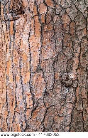 Bark Of Pine Tree. Seamless Tree Bark Background. Brown Texture Of The Old Tree. Natural Coniferous