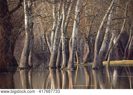 Big trees standing in water on a flooded shore