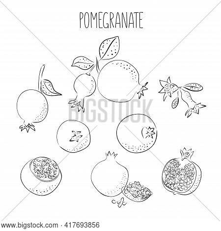 Ripe Line Ink Pomegranate And Tropical Leaves Vector Illustration On Pink Background. Hand Drawn Ske