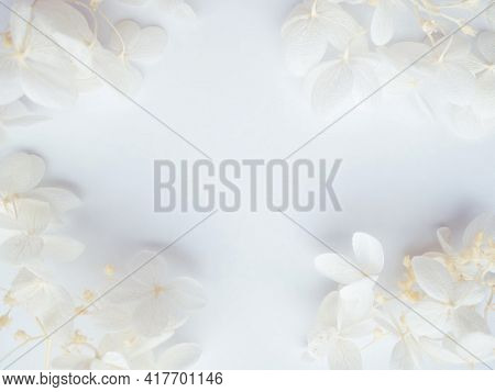 Flowers Composition. Frame Made Of White Flowers Hydrangea On White Background. Wedding Day, Mothers