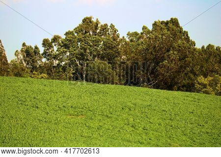 Lush Green Grasslands Surrounded By Deciduous Trees Taken At An Agricultural Field In The Rural Coun